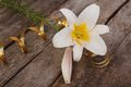 White fragrant lily flower with gold ribbon on the old wooden Royalty Free Stock Photos
