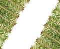 White frame made from green christmas tree Stock Photo