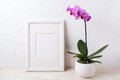 White frame mockup with purple orchid in flower pot Royalty Free Stock Photo