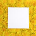 White frame on yellow flowers background. Spring, summer concept. Flat lay, top view