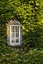 Window overgrown by lush green ivy Royalty Free Stock Photo