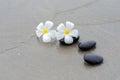 White frangipani and zen stone on the sandy beach Stock Image