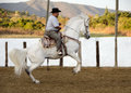 White friesian horse man on at mexican fieasta in arena doing with ornate spanish saddle Royalty Free Stock Photography