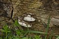 White fungus on log with grass Stock Photo