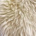 White fur background Royalty Free Stock Photo