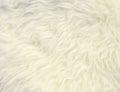 White fur texture background Royalty Free Stock Photo