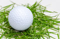White golf ball on fresh grass Stock Image