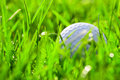 White golf ball on grass Royalty Free Stock Photo