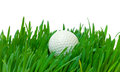 White golf ball in the long grass closeup on background Stock Photography