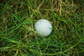 White golf on nest green grass background Royalty Free Stock Images