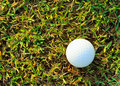 White golfball on green glass Royalty Free Stock Photo