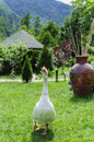 White goose on green grass in mountain landscape Royalty Free Stock Image