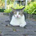 White and grey cat is crouching in garden Stock Images