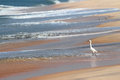 White heron on beach Royalty Free Stock Images