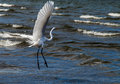 White heron in beach photography of a Royalty Free Stock Photos
