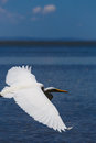 White heron in beach photography of a Royalty Free Stock Image