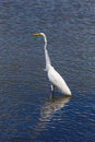 White heron in beach photography of a Royalty Free Stock Images