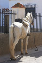 White horse in the Andalusian town of Guadix Stock Images