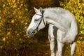 White horse in autumn park Royalty Free Stock Photo