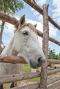 White horse with blue sky Stock Image