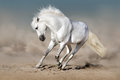 Image : White horse in desert wild motion kissing
