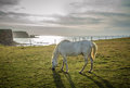 White horse on field near cliff Royalty Free Stock Photo