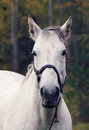 White horse in the forest day summer Royalty Free Stock Images