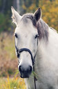 White horse in the forest day summer Stock Images