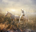 White horse galloping on meadow collage of horses a Royalty Free Stock Image