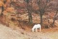 Bianco cavallo pascolo