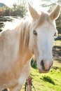 White Horse in Green Grass Field during Daytime Stock Photo