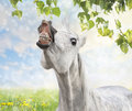 White horse is happy about spring and summer background with dandelion pasture branches with green leaves Stock Image