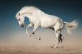 White horse jump Royalty Free Stock Photo