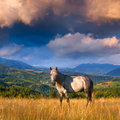 White horse in the mountains colorful sunset Stock Photo