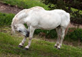 White horse on nature background Royalty Free Stock Images