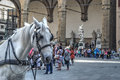 White horse in Piazza della Signoria Royalty Free Stock Photo