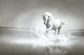 White Horse Running Through Wa...