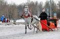 White horse runs on snow ground. Royalty Free Stock Photo