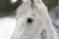 White horse's eyes Royalty Free Stock Photo