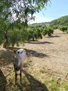 White horse the shadow of the olive grove Royalty Free Stock Photo