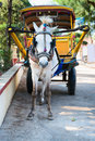 White horse and traditional tourist carriage Royalty Free Stock Images