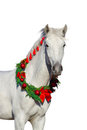 White horsein christmas wreath Royalty Free Stock Photo