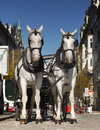 White horses a pair of drawn carriage old town square prague october Stock Image
