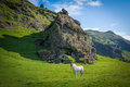 White Icelandic Horse in front of a rock dwelling Royalty Free Stock Photo