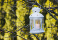 White iron lantern hanging on hawthorn branch. Garden party Stock Photography