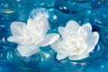 White jasmine flowers on water two beautiful double flowering floating with blue glass stones Royalty Free Stock Images