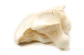 White king oyster mushroom Royalty Free Stock Photos