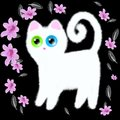 White Kitten with Multicolored Eyes on a Black Background. Royalty Free Stock Photo