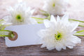 White label with copy space for your text and flowers in the background Royalty Free Stock Photography