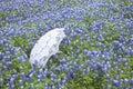 White lace parasol in field of Texas bluebonnets